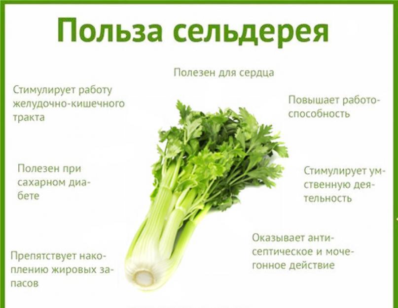 Сельдерей Для Похудения Рецепт Отзывы. Сельдерей для похудения